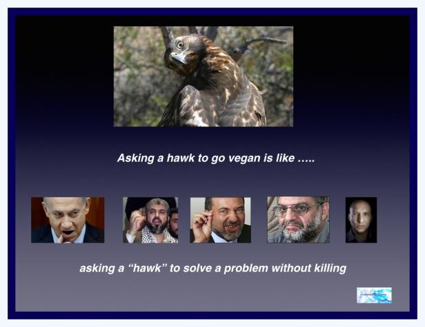Hawks can't go vegan.001